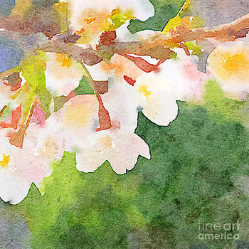 Beverly Claire Kaiya - White Cherry Blossoms Digital Watercolor Painting 2