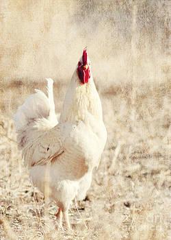 White Chicken by Pam  Holdsworth
