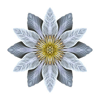 White Clematis I Flower Mandala White by David J Bookbinder
