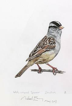 Michael Earney - White Crowned Sparrow
