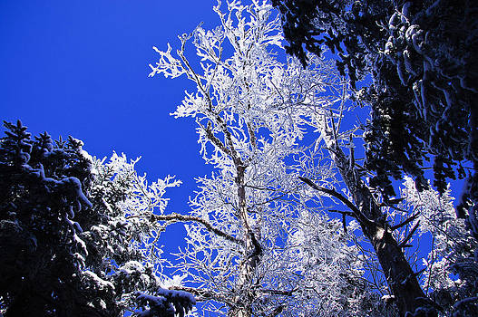 White Crystal by Rockybranch Dreams