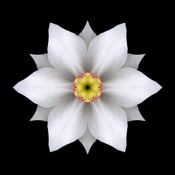 White Daffodil II Flower Mandala by David J Bookbinder