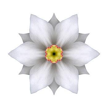 White Daffodil II Flower Mandala White by David J Bookbinder