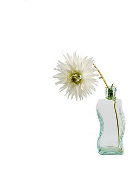 Jan Hagan - White Dahlia in Glass