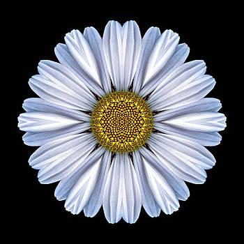 White Daisy Flower Mandala by David J Bookbinder