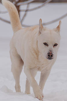White Dog in Snow by Guy Whiteley