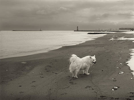 White Dog on Beach by  Nick Solovey