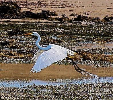 White Egret by Blair Stuart