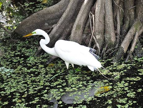 White Egrets by Susan Cram