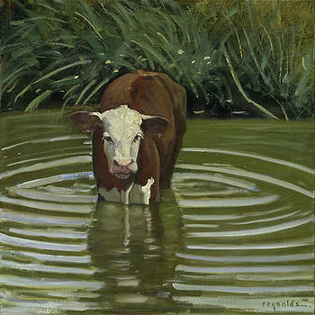 White Face Herford in the Pond by John Reynolds