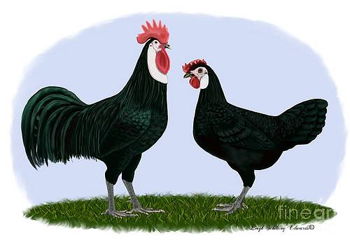 White Faced Black Spanish Rooster and Hen by Leigh Schilling