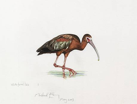 Michael Earney - White-faced Ibis