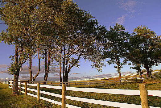 White Fence and Copse of Trees by M Hess