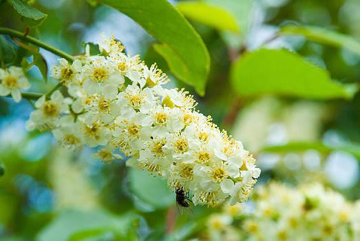 Devinder Sangha - White flower