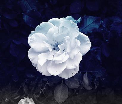 White Flower by Felix Concepcion