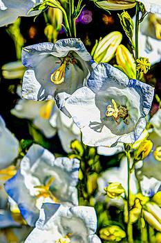 Chris McKenna - White Flower Spendor