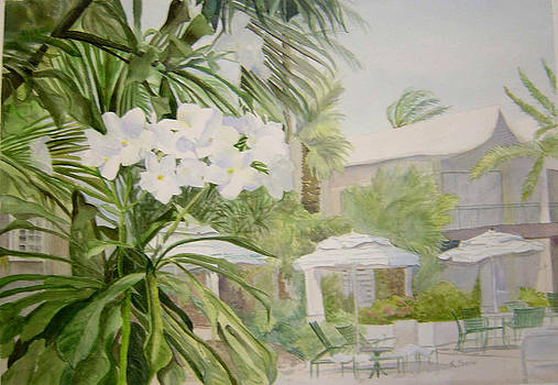 White flowers Aruba by Katherine  Berlin