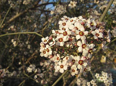 White flowers tree by Ioana Ciurariu