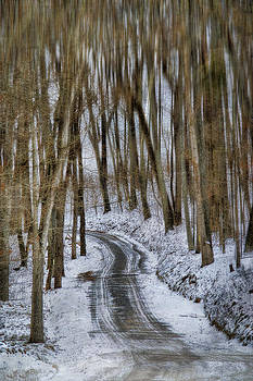 White Forest by Kathy Jennings