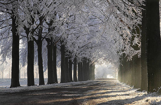 Gregoir Hoppenbrouwers - White Frost
