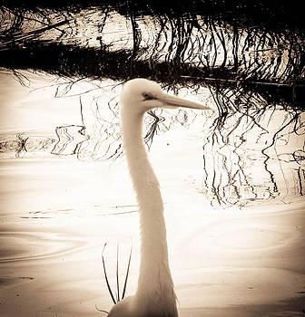 Christy Usilton - White Heron Dream
