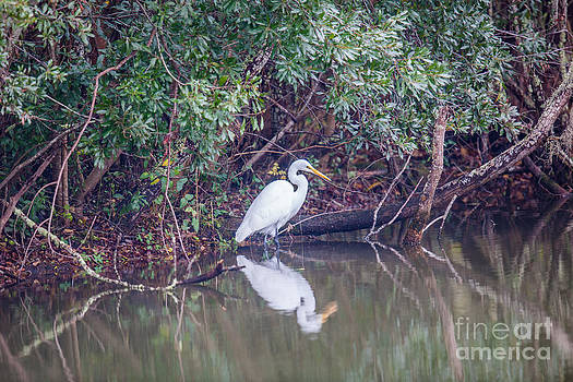 Dale Powell - White Heron Looking For Lunch