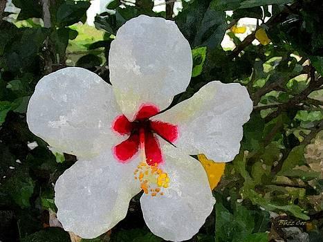 Buzz  Coe - White Hibiscus