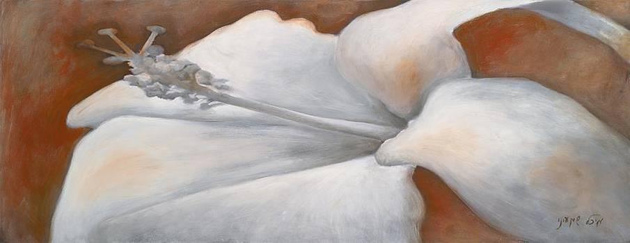 White Hibiscus by Michal Shimoni