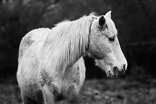 White Horse by Alena Bytcankova