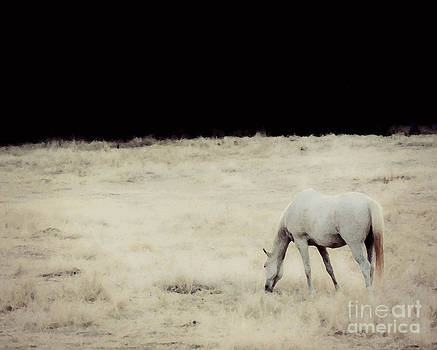 White Horse by Amy Neal