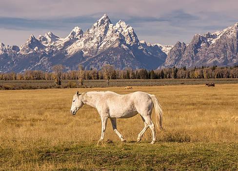 Randy Straka - White Horse Grand Teton National Park
