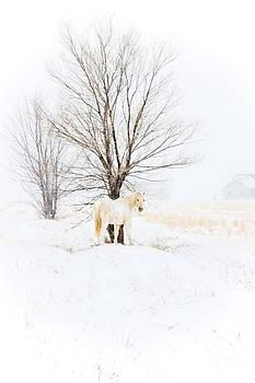 White horse in winter field with tree by Jesska Hoff