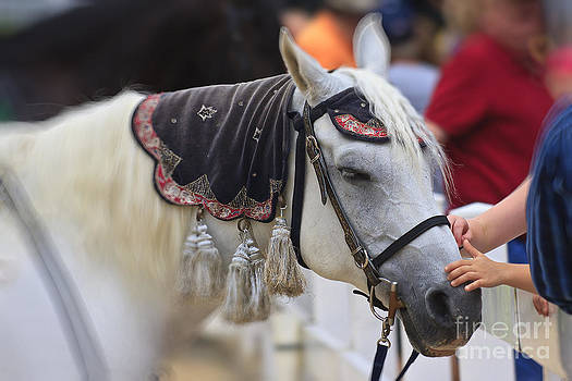 Jill Lang - White Horse