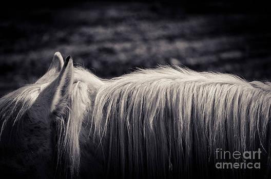 Silvia Ganora - White horse mane