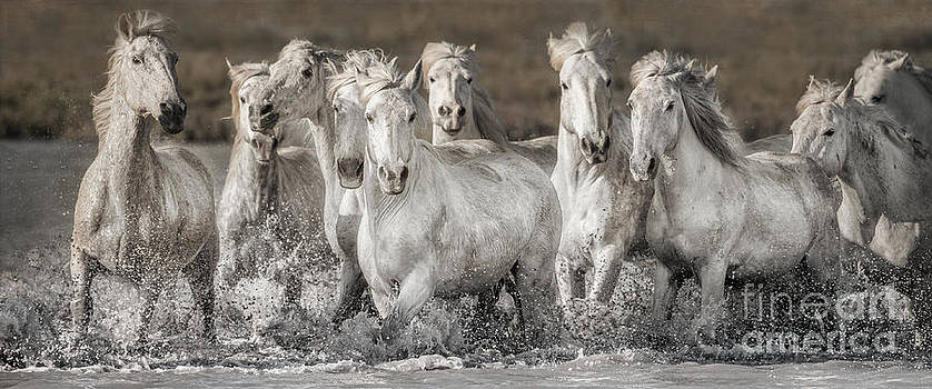 White Horses by Heather Swan