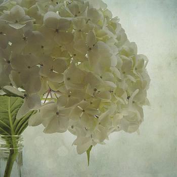 White Hydrangea by Sally Banfill