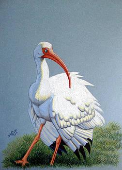 White Ibis by Angela DeRiso