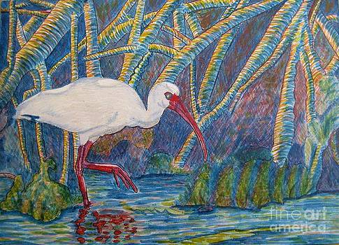 Judy Via-Wolff - White Ibis in the Mangroves
