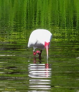 Buzz  Coe - White Ibis Wading I