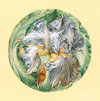 White Iris by David Evans