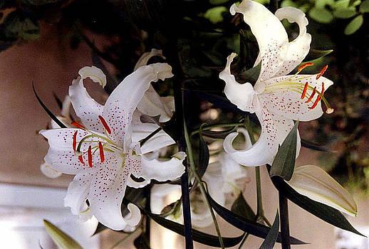 Stephen Proper Gredler - White Oriental Lilium
