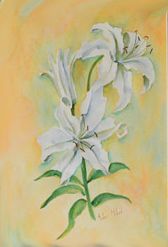 White Lilium by Aileen McLeod