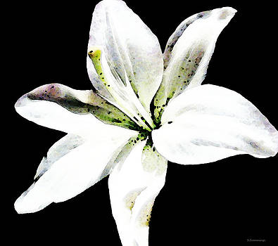Sharon Cummings - White Lily - Elegant Black And White Floral Art By Sharon Cummings