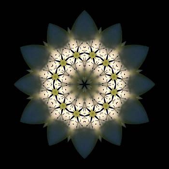 White Lily III Flower Mandala by David J Bookbinder