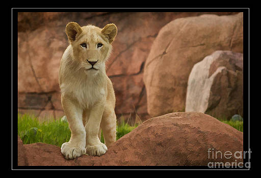 White Lion Cub Poster Print by Mike Mulick