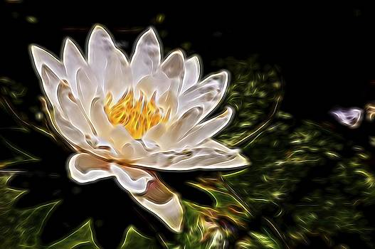White Lotus Flower by Andrea King