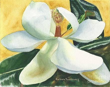 White Magnolia by Barbara Rosenzweig