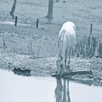 White miniature horse at pool by Veronica Ventress