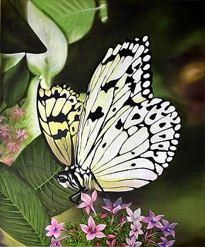 White Monarch by Sherry Cullison