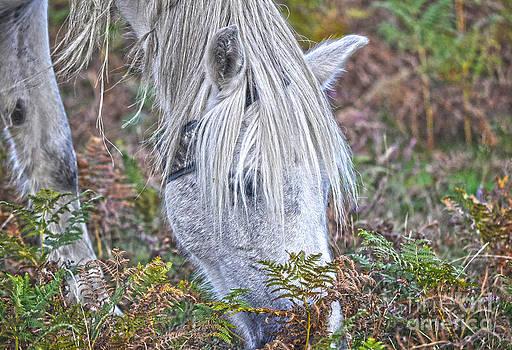 White New Forest Pony by Skye Ryan-Evans